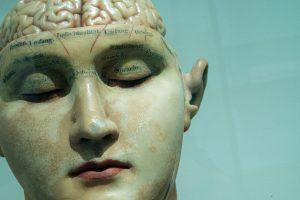 Aivot, kasvot